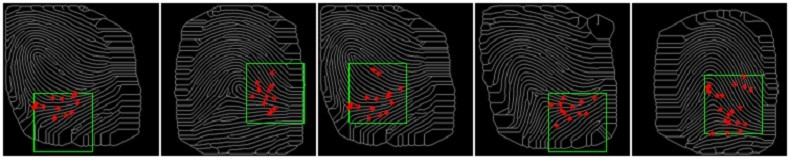 5 different full fingerprints from an optical fingerprint data set