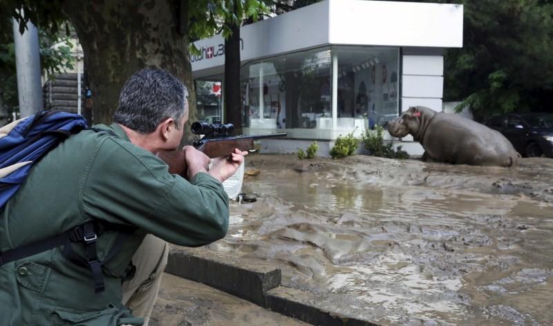 Georgia floods,Zoo break after Georgia floods,Zoo Animals,Deadly Zoo Animals,cages damage,heavy rainfall,Tbilisi,flooded street,hippopotamus