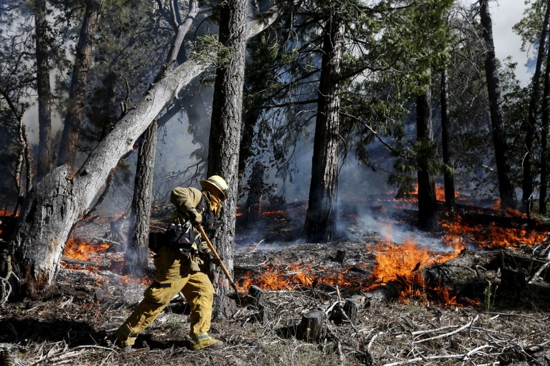 San Bernardino National Forest,Lake Fire burns San Bernardino National Forest,Lake Fire,Fire Continues,fire,fire accident,Fire Burns,Lake Fire in San Bernardino National Forest
