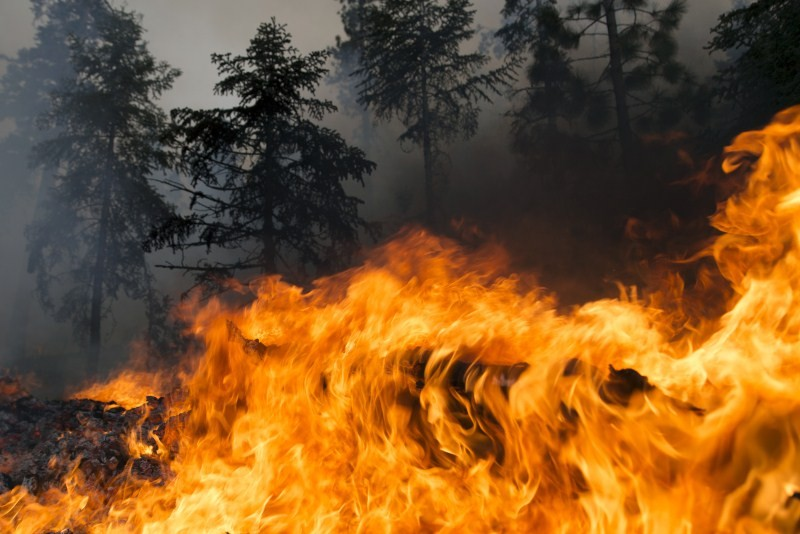 San Bernardino National Forest,Lake Fire burns San Bernardino National Forest,Lake Fire,Fire Continues,fire,fire accident,Fire Burns,Lake Fire in San Bernardino National Forest