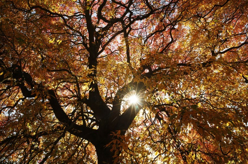 Autumn Beauty,Autumn Beauty 2015,Autumn Beauty wallpaper,Autumn Beauty quotes,wallpaper,beautiful pics,photography