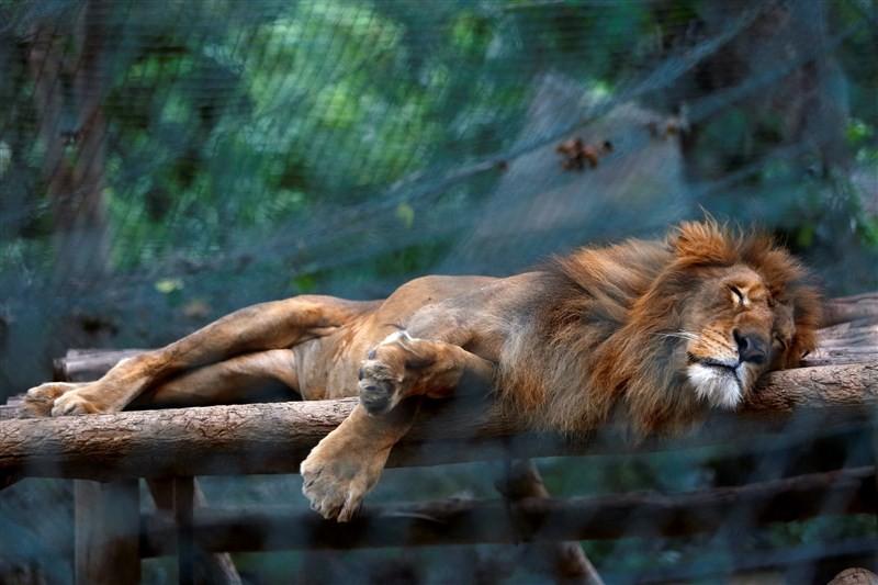 Venezuela's hungry zoo animals,hungry zoo animals,Venezuela zoo animals,chronic food shortages,Venezuela zoo,Venezuela zoo animal
