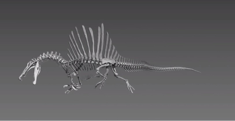 Digital model of Spinosaurus