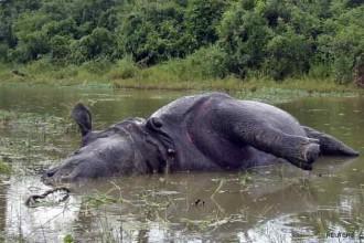 another-rhino-slaughtered-in-kaziranga