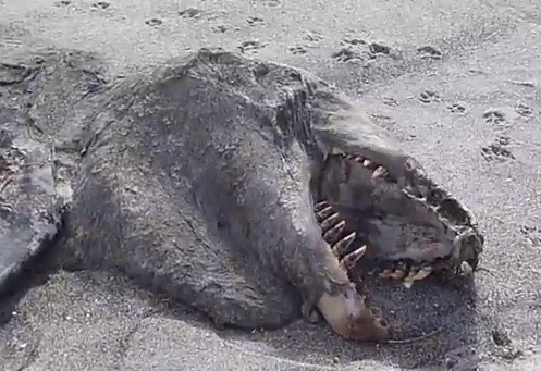 Mysterious 'Sea Monster' Corpse Washes Ashore on New ...