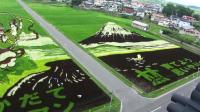 japanese-farmers-turn-rice-fields-into-paintings