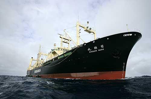 Hoax Man Killer Whale by Killer Whales a Hoax