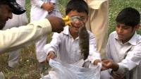 the-ratcatcher-of-peshawar-faces-uphill-battle
