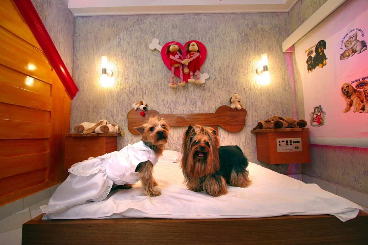 World S Top 10 Luxurious Hotels And Restaurants For Dogs