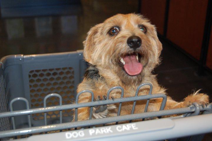 Dog Park Cafe In Temecula