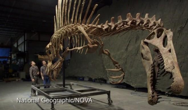 Spinosaurus bones