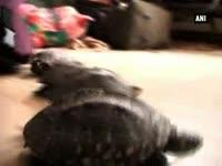 man-arrested-with-218-turtles-at-railway-station-in-kanpur