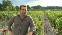 hot-september-to-give-bordeaux-wine-optimal-maturity
