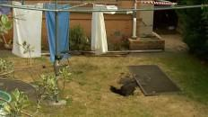 Sinkhole that Trapped Australian Woman was an Old Well