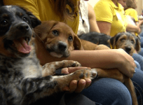 12th annual Puppy Bowl raises awareness about pet adoption