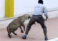 leopard bangalore