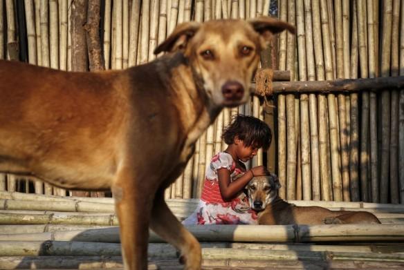 Dog rape India