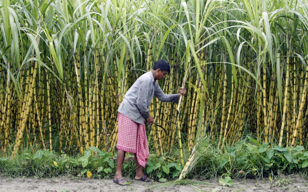 Sugar production declines 2 million tonnes in India during ...