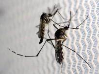 First Zika virus case confirmed in Singapore