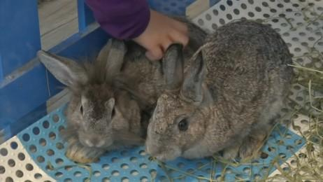 Hong Kongs first rabbit cafe finds itself in licensing trouble