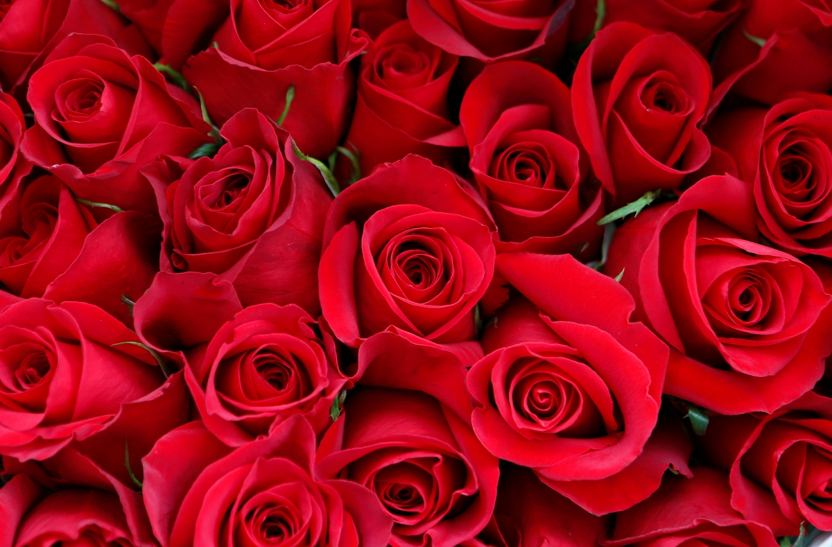 Valentine 39 s day amazon prime makes the v day special with for Buying roses on valentines day