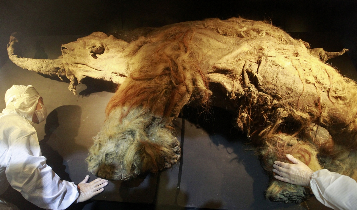 the woolly mammoth with inward curving tusks in the resurrection of an ice age giant