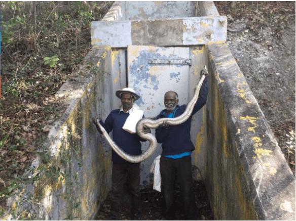 snake trackers from tamil nadu, florida pythons