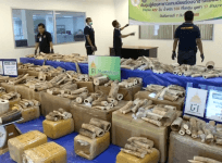Thai authorities seize more than 300kg of smuggled ivory