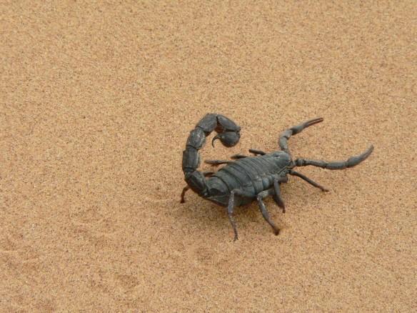 scorpion, scorpion venom, cancer, malaria, health, research,