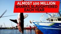 Almost 100 million sharks slaughtered each year