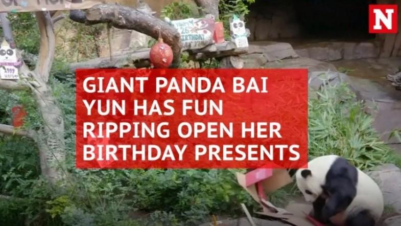 Worlds oldest giant panda, Basi, dies in China