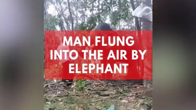 Man flung into the air by elephant