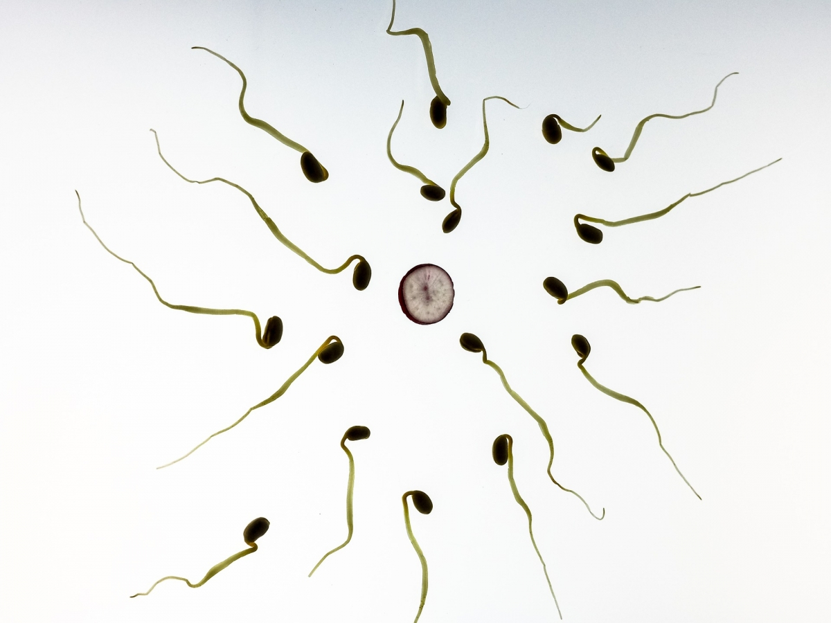 Heard Of Sperm Test App Here S How You Can Check Your