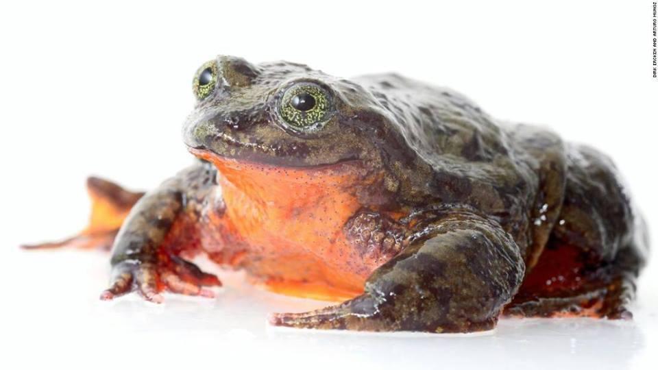 frog dating site Witten