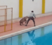 india-leopard-strolls-into-school-injuring-4