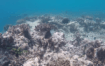 this-is-the-worst-coral-bleaching-event-ever-recorded-on-the-great-barrier-reef