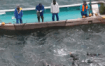 100s-of-dolphins-tortured-in-japan-in-alarming-facebook-live-stream