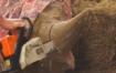 rhino-horns-sawn-off-at-czech-zoo-as-pre-emptive-strike-against-poachers