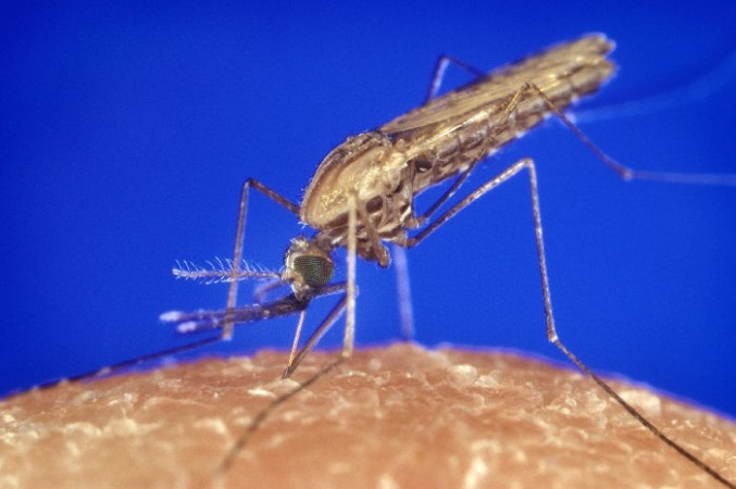 Naturally Immune Tanzania Children Could Aid in Malaria Vaccine Production; Says Scientists