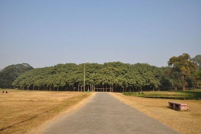 The Great Banyan Tree