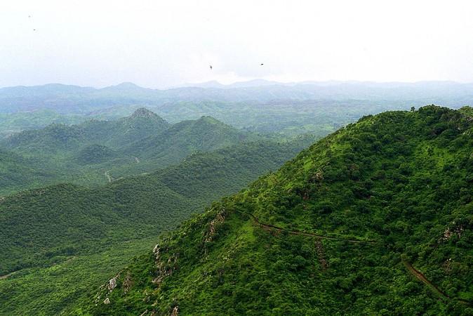 Greenery In Rajasthan
