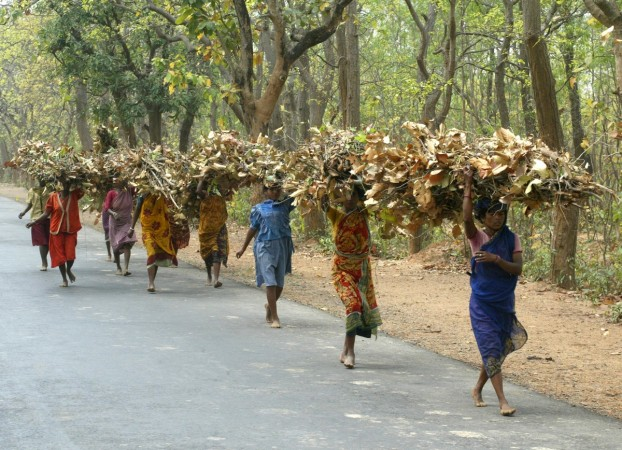 Tribals Forests