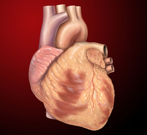 World heart Day 2014: here are 15 most interesting facts about the human heart that we probably never knew.