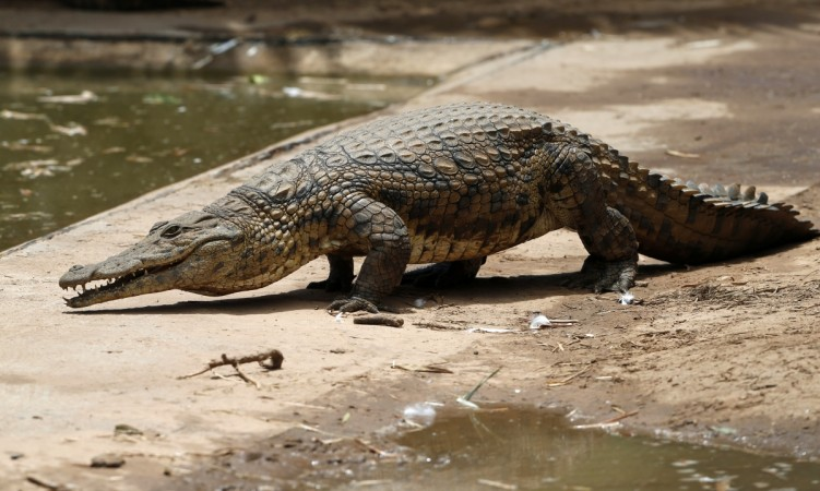Horrified Mother calls Cops After Spotting Crocodile in Garden, turns out to be Inflatable Toy