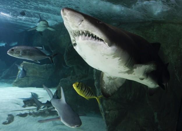 Human head leg found inside shark belly
