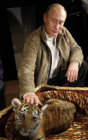 Russian Prime Minister Vladimir Putin strokes a Siberian tiger cub a his Novo Ogaryovo residence outside Moscow.
