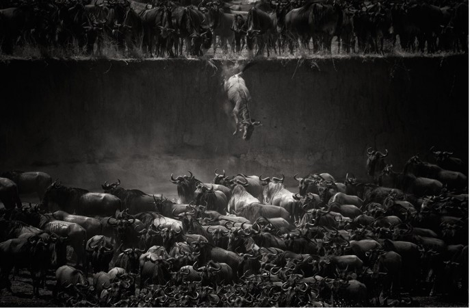 The Great Migration, by Nicole Cambré which won in the Nature category of National Geographic 2014 Photo Contest