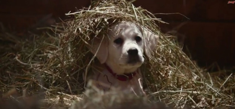 Budweiser Super Bowl Commercial 2015