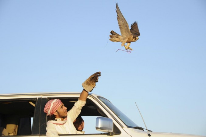 A Saudi man release his falcon during a hunt in a desert in Saudi Arabia. (Representation Pic)
