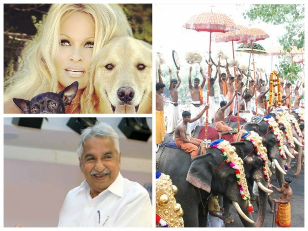 Pamela Anderson writes to Oommen Chandy not to use elephants for Thrissur Pooram